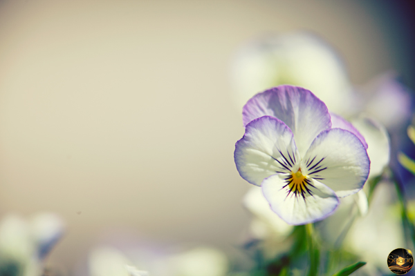 may-flowers-03