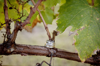 winery-wedding-abq-08-featured